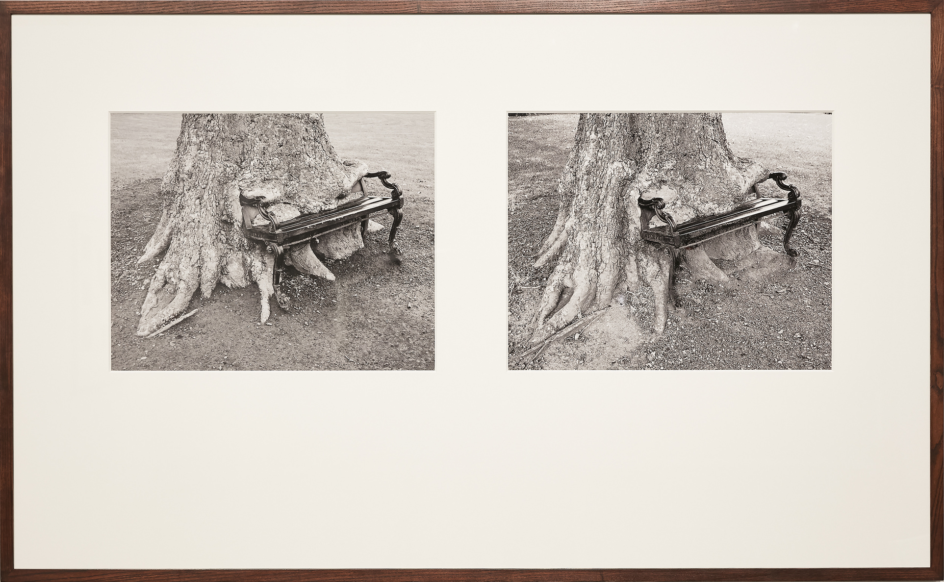 Sean Lynch, The Hungry Tree, 2017, 2 photographic prints in one frame, 98×143 cm